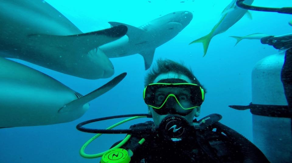 David Simpson diving with sharks in the Bahamas. Diving with sharks in the Bahamas