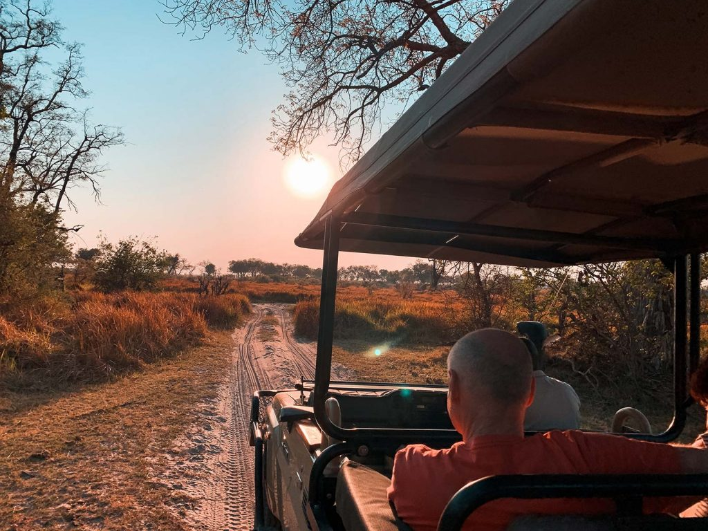 Family on safari drive in Botswana, Africa. An owl and African sunsets