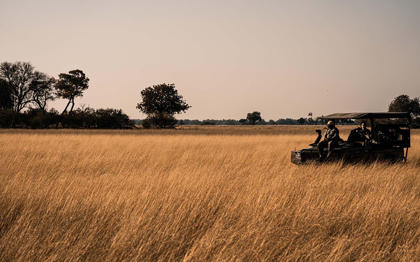 Fields of grain in Botswana, South Africa