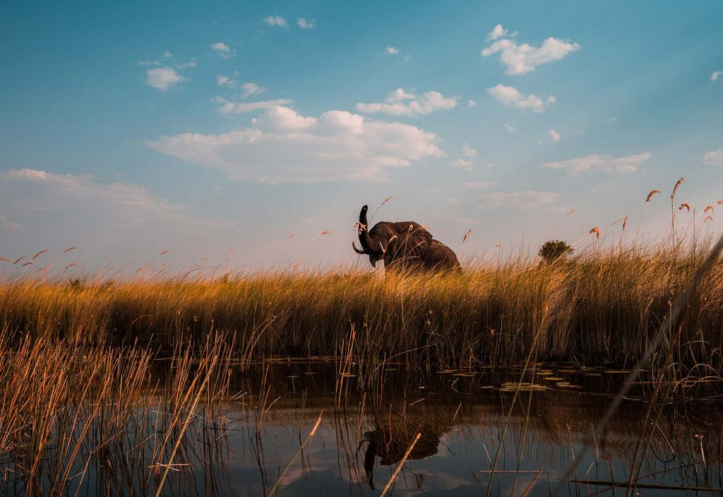Elephant at Okavango Delta in Botswana, Africa. An owl and African sunsets
