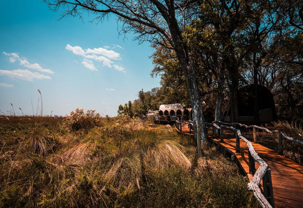 Wooden path to the tents in Botswana, Africa. An owl and African sunsets