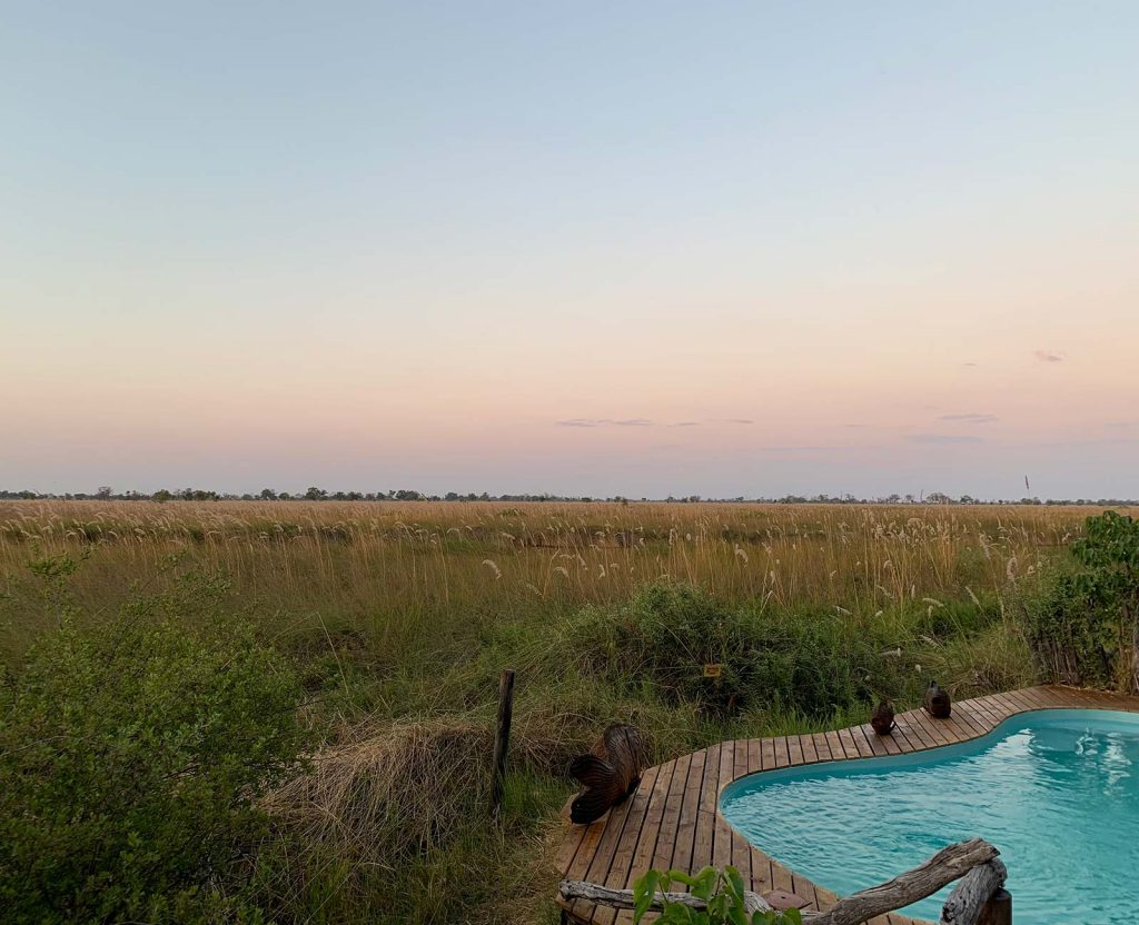 Monkeys by the swimming pool at game reserve in Botswana, Africa. Sh*ting next to an elephant