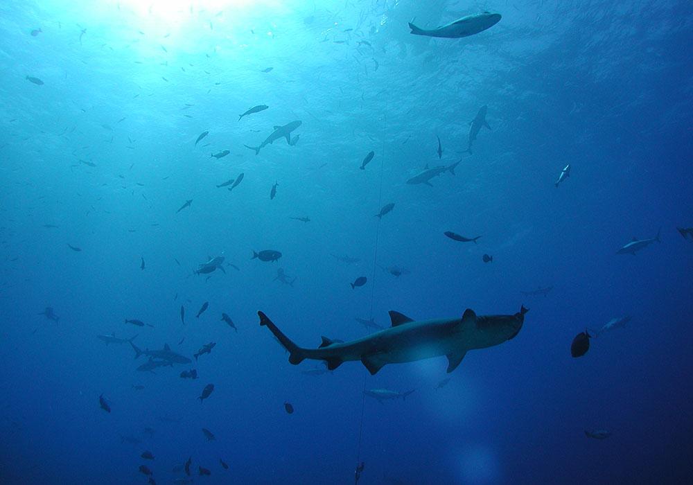 EPIC TRAVEL STORIES, SHARKS